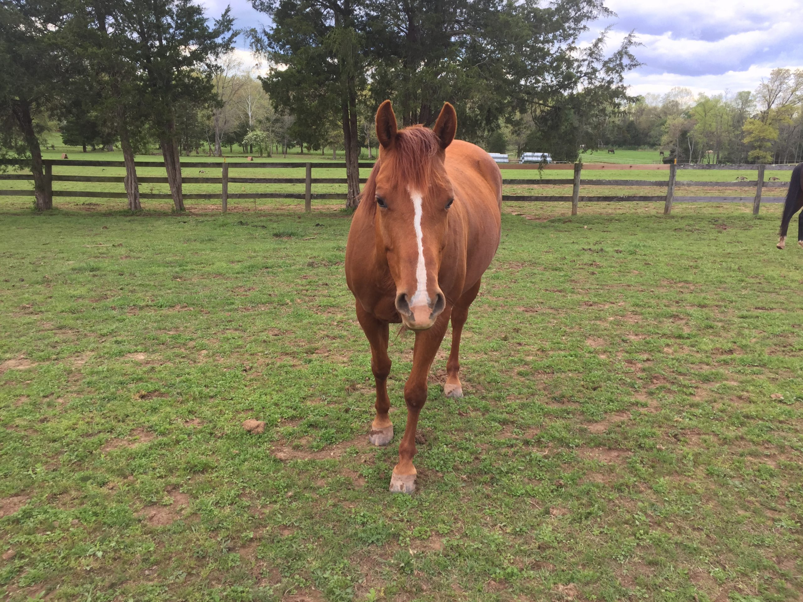 How to Work With a Horse at Liberty: Beginner Tips from Lindsey Partridge
